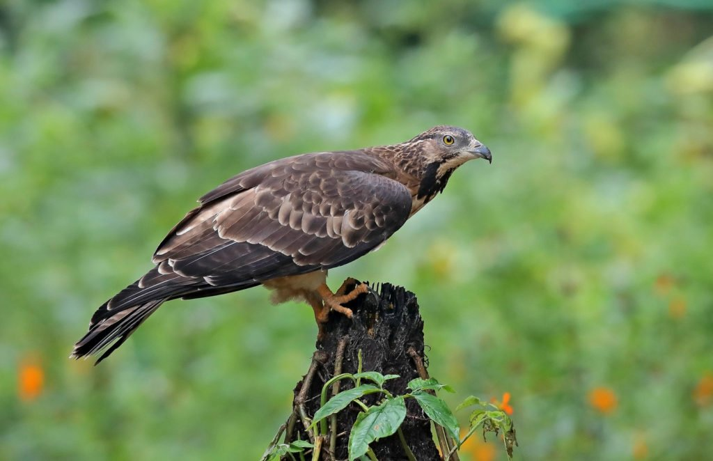 Bird watching on Chorao island in goa